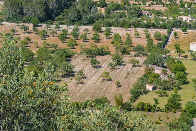 Agricultura em Mallorca fotos de stock royalty free