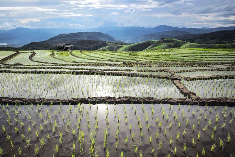 Agricultura em montanhas altas fotografia de stock