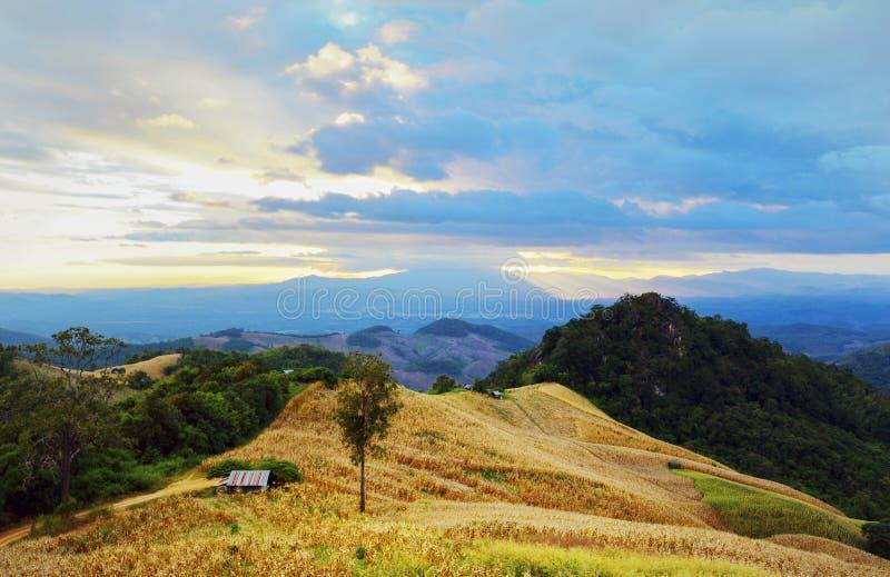 Agricultura em montanhas altas fotos de stock royalty free