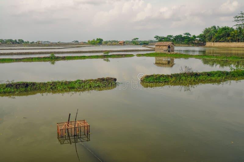 Agricultura en Bangladesh fotografía de archivo libre de regalías