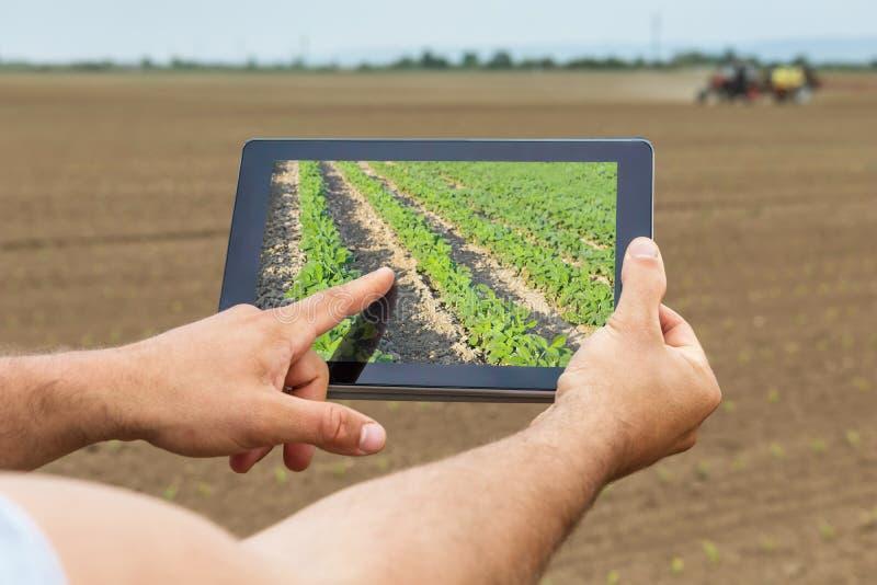 Agricultura esperta Fazendeiro que usa a plantação da soja da tabuleta Agri moderno imagem de stock royalty free
