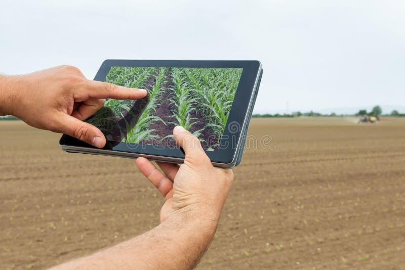 Agricultura esperta Fazendeiro que usa a plantação do milho da tabuleta AGR moderna imagens de stock