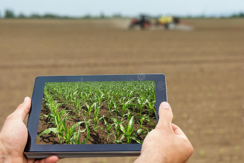 Agricultura esperta Fazendeiro que usa a plantação do milho da tabuleta AGR moderna imagem de stock