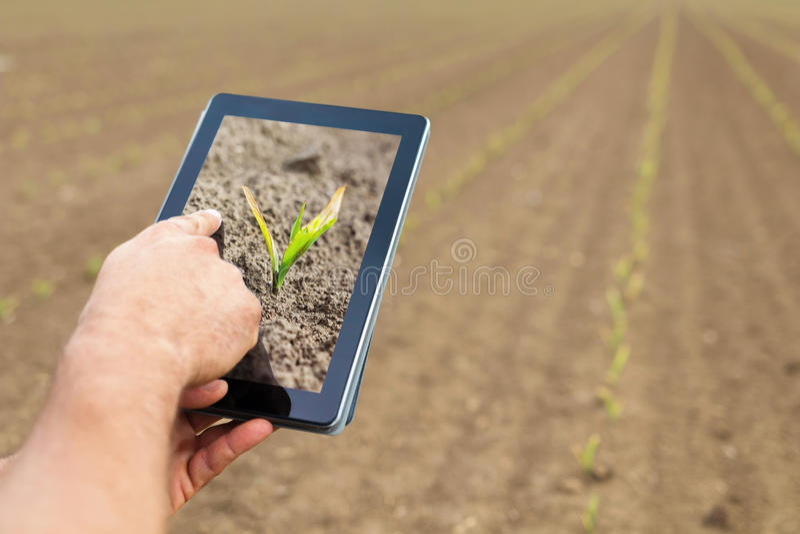 Agricultura esperta Fazendeiro que usa a tabuleta Dano de Frost às plantas imagens de stock royalty free