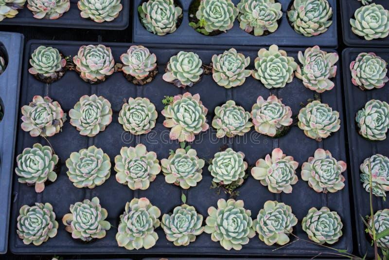 Download Agricultura Industrial Del Cultivo De La Planta De La Flor Dentro De La Casa Verde Foto de archivo - Imagen de cultivación, comercial: 100526472
