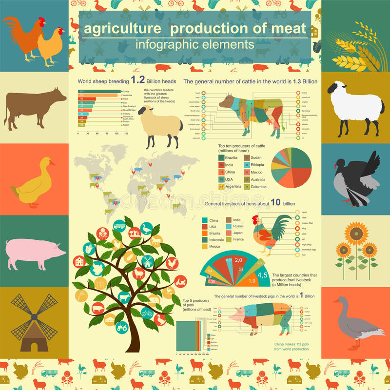 Agricultura, infographics da produção animal, ilustrações do vetor ilustração stock