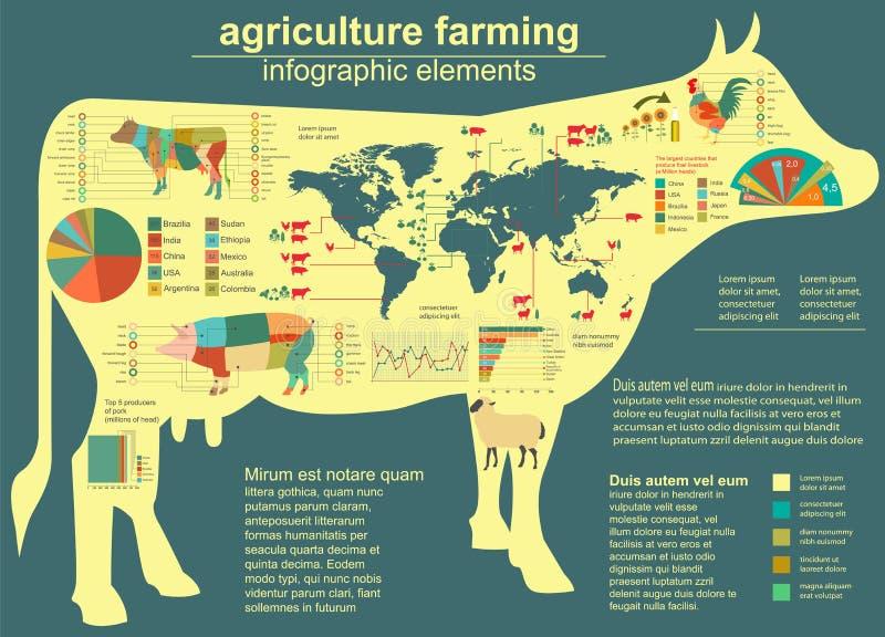 Agricultura, infographics da produção animal, ilustrações do vetor