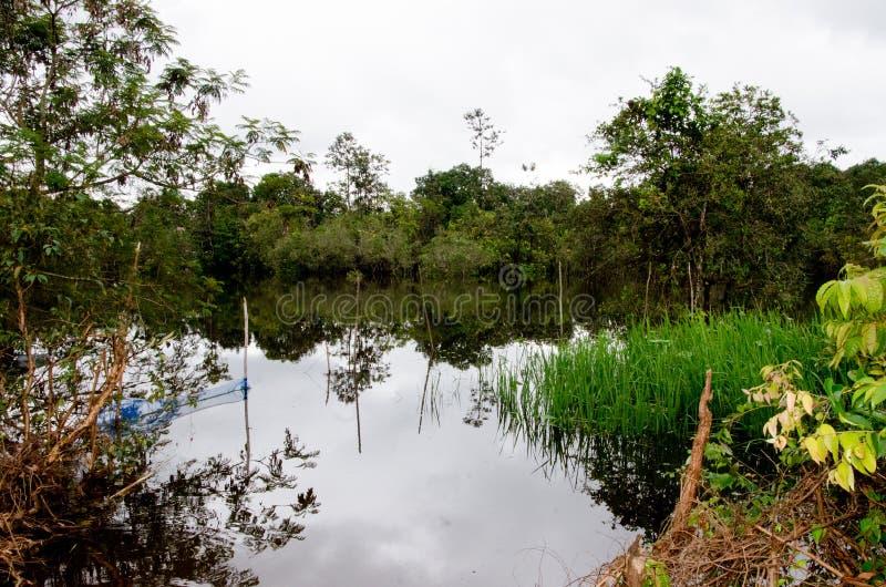 Agricultura inundada Tailândia do cultivo do arroz imagem de stock