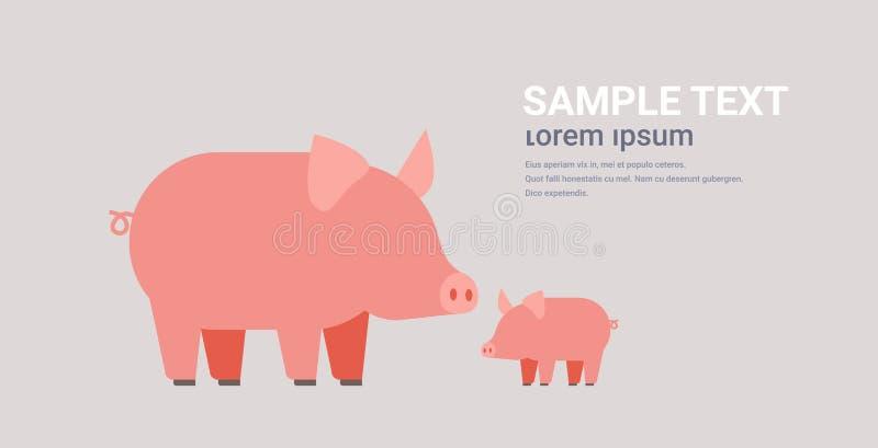 Agricultura linda de los animales domésticos de la granja de la historieta de la familia de los cerdos que pasta el espacio hori libre illustration