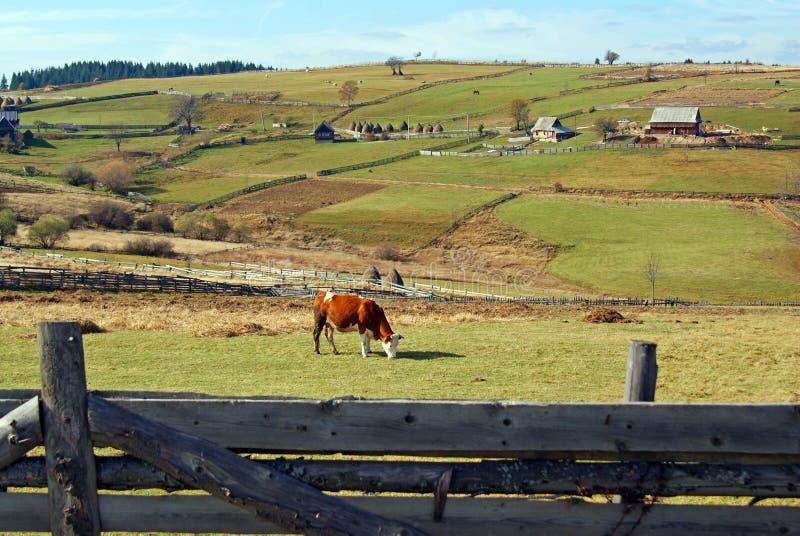 Agricultura na parte superior da montanha foto de stock royalty free