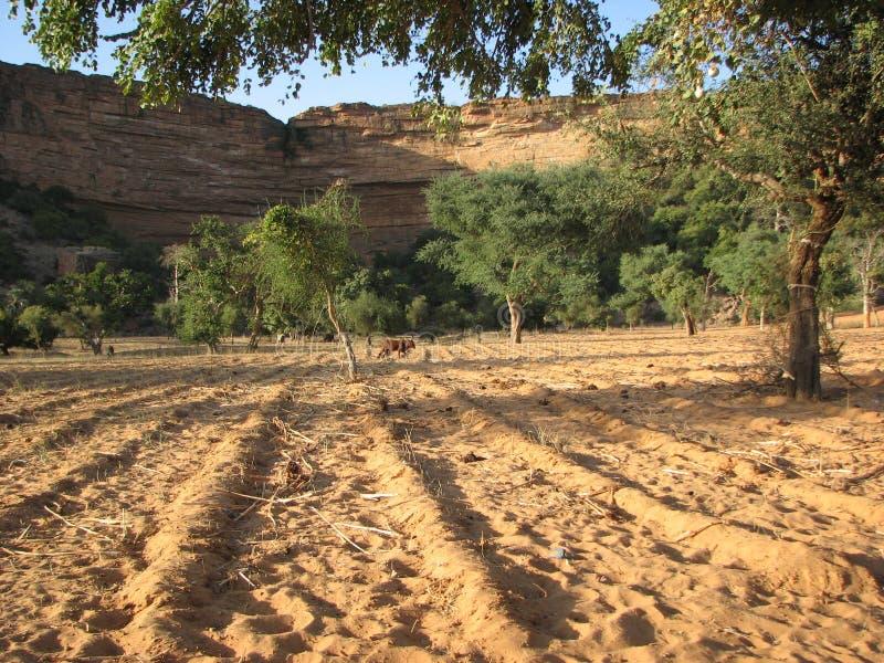 Agricultura tradicional foto de archivo