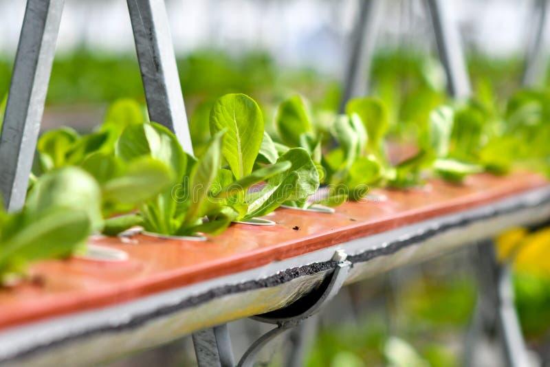 Agricultura urbana, cultivo urbano, o el cultivar un huerto urbano foto de archivo