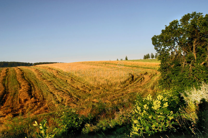 Agricultural autumn field stock images