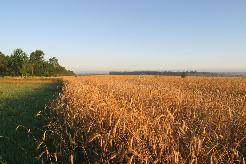 Agricultural autumn field stock image