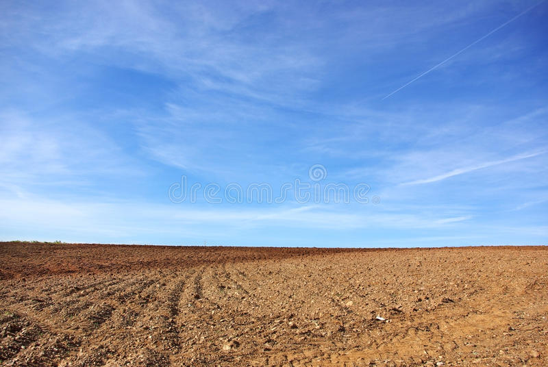 Agricultural Background. Royalty Free Stock Photo
