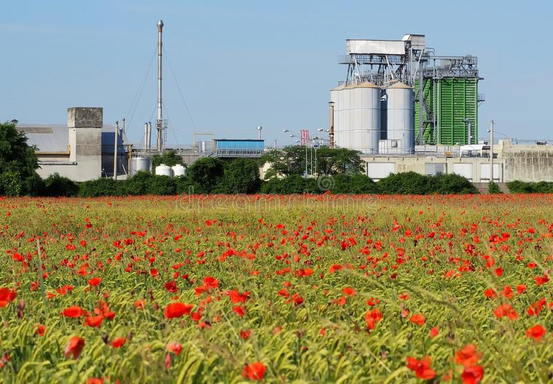 Agricultural buildings with grain silos and drying tower behind a large wheat field with a lot of red poppies.  stock photos