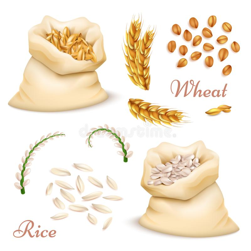 Agricultural cereals - wheat and rice isolated on white background. Vector realistic grains, ears clipart collection royalty free illustration