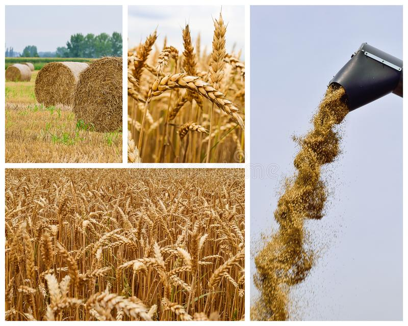 Agricultural collage. Collection of agricultural images stock photography