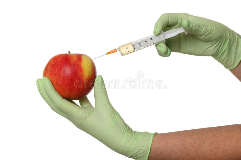 Agricultural concept, apple and syringe. Scientist injecting liquid to red apple using syringe royalty free stock images