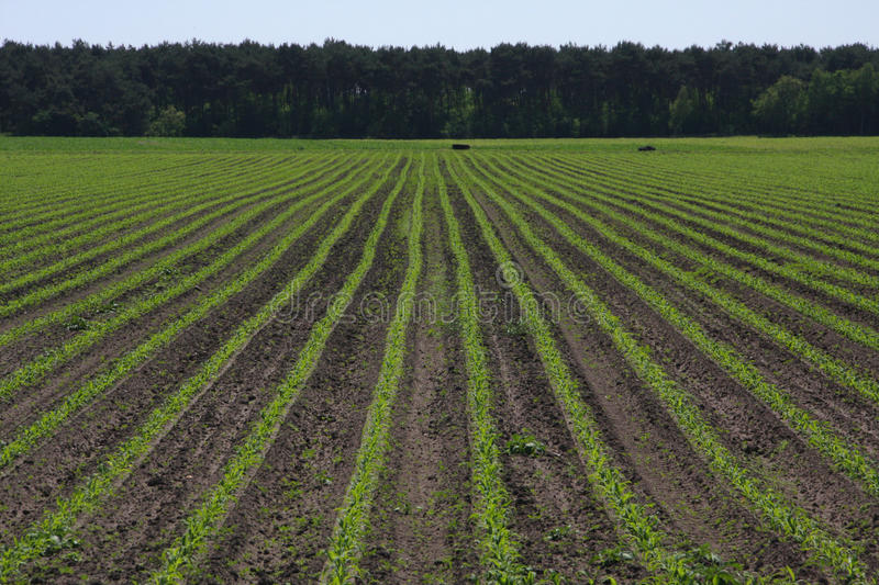 Agricultural crops royalty free stock photography
