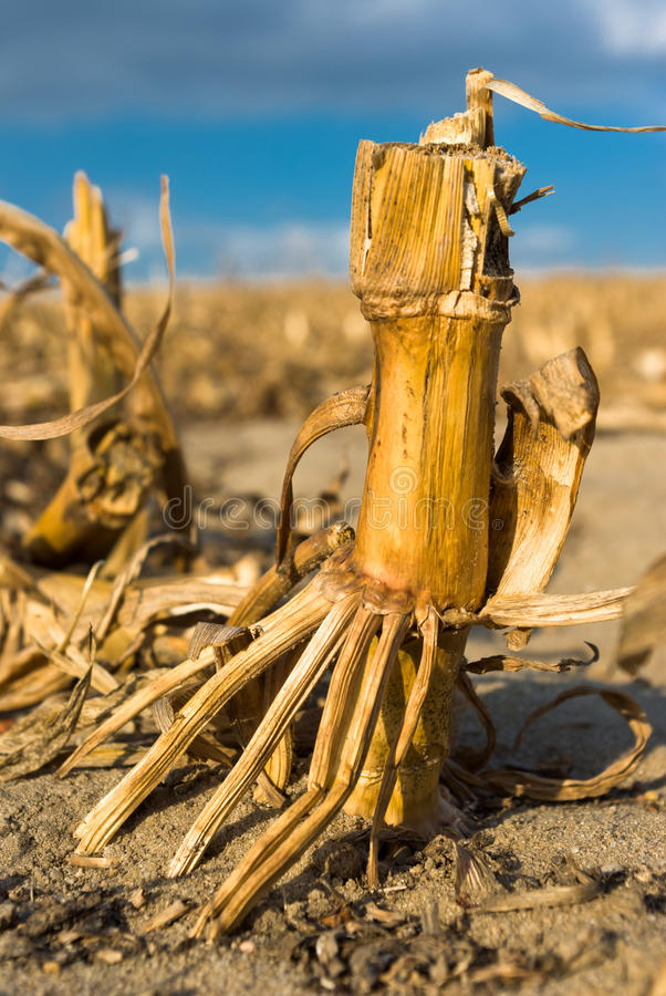 Download Agricultural field stock image. Image of healthy, brown - 21479741