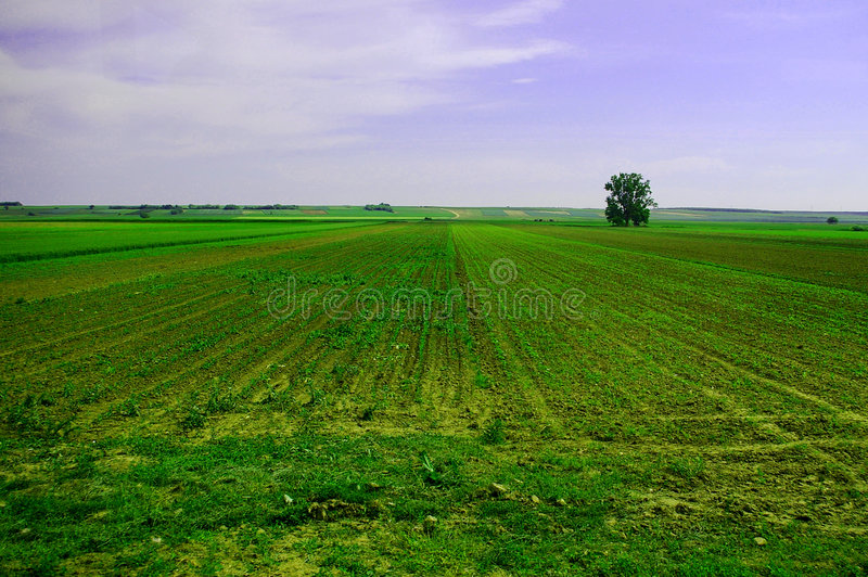 Agricultural Field Stock Photography