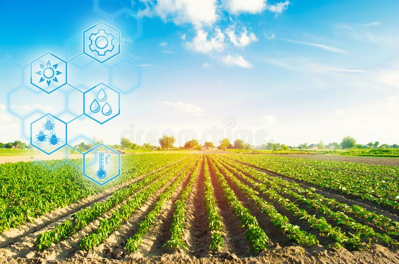 Agricultural field in a clear sunny day. High technologies and innovations in agro-industry. Study quality of soil and crop. stock photo