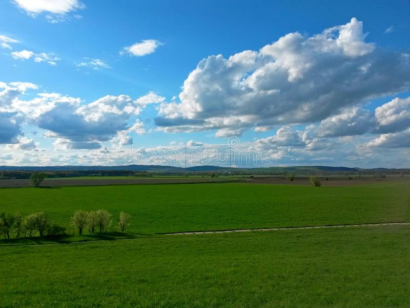 Agricultural field covered with green crops, on a sunny day, in the background are forests, mountains and transmitter poles. Image stock photo