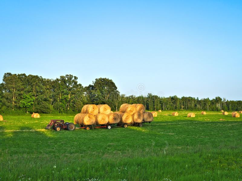 Agricultural field with Round Bales of hay to feed cattle in winter stock images