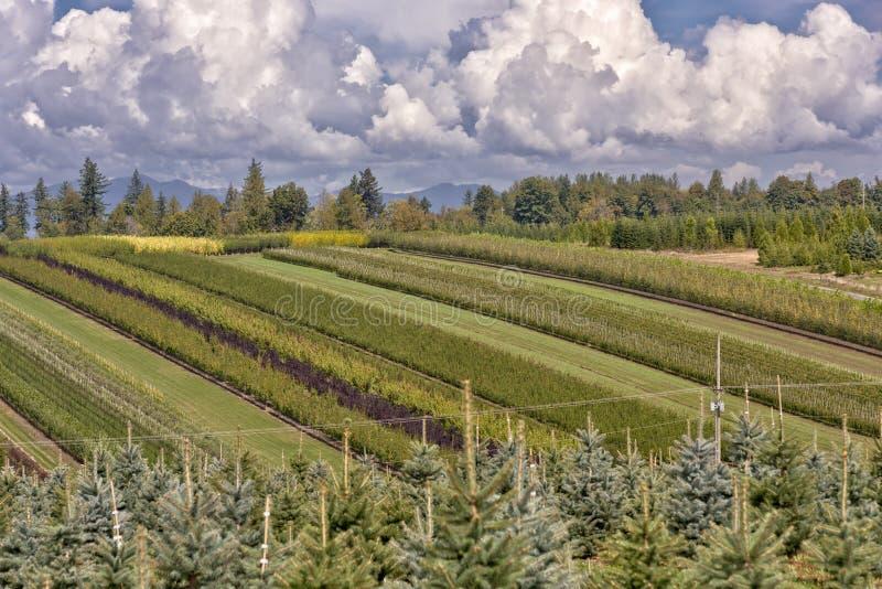 Oregon Nurseries And Seedling Plants Stock Photo Image