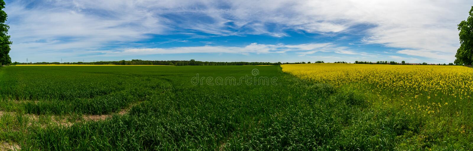 Panoramic view of the rapeseed field. royalty free stock images