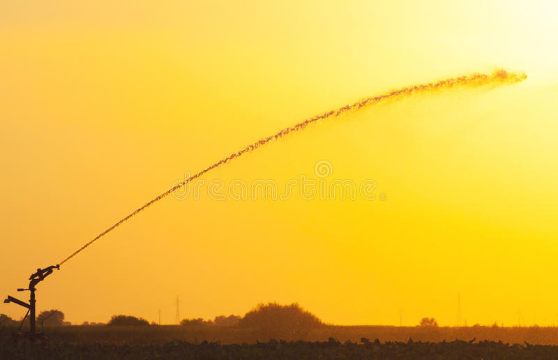 Agricultural irrigation system on the wheat field royalty free stock image