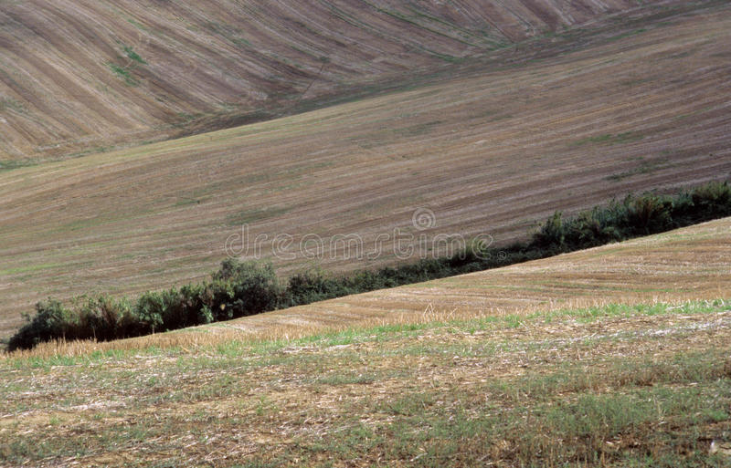 Download Agricultural land stock image. Image of land, outdoor - 27032025