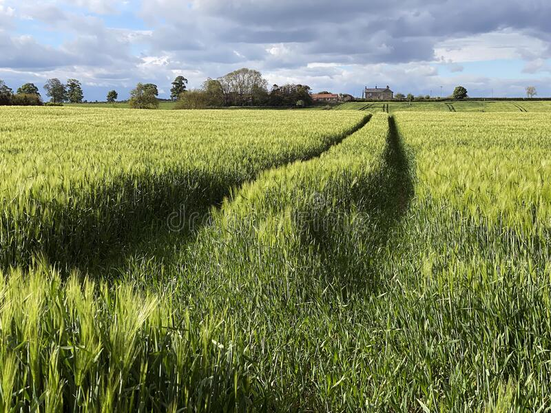 Agricultural land with a crop of barley - Yorkshire - United Kingdom stock photography