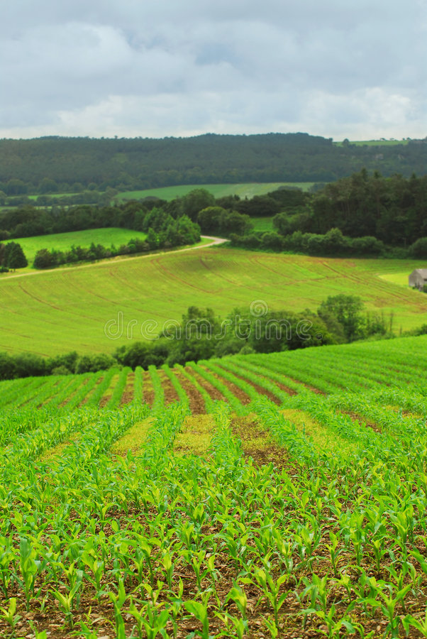 Download Agricultural landscape stock image. Image of agriculture - 3733271