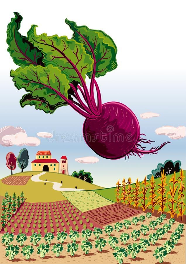 Agricultural landscape, with beetroot. Agricultural landscape with farm, and beetroot stock illustration