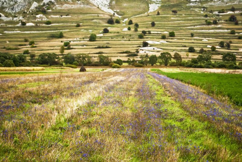 Agricultural landscape detail royalty free stock photo