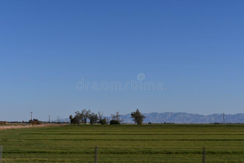 El Centro farm field with mountains. Agricultural landscape of a farm field with mountains in the background. El Centro California. Imperial Valley farms royalty free stock photos