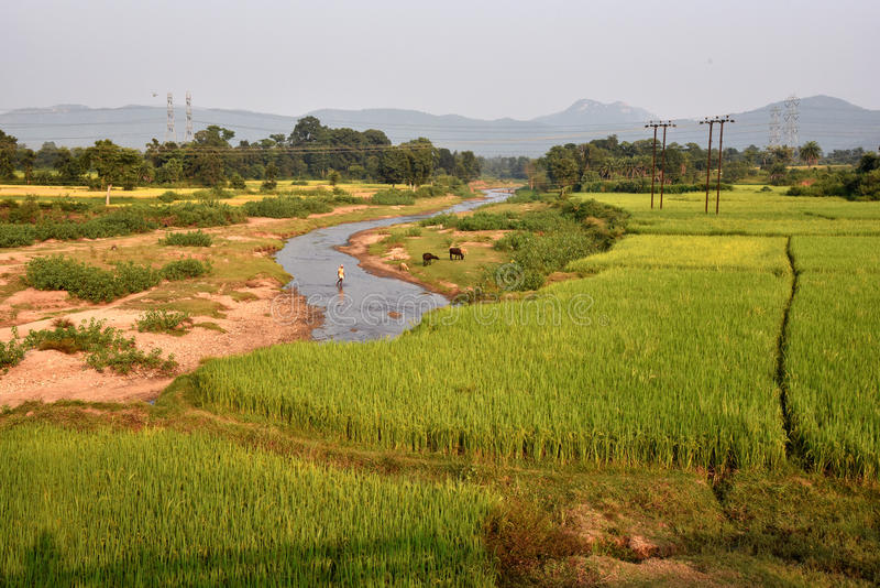 Agricultural Landscape in India. A wide view of the agricultural landscape at remote village of Purulia-India royalty free stock images