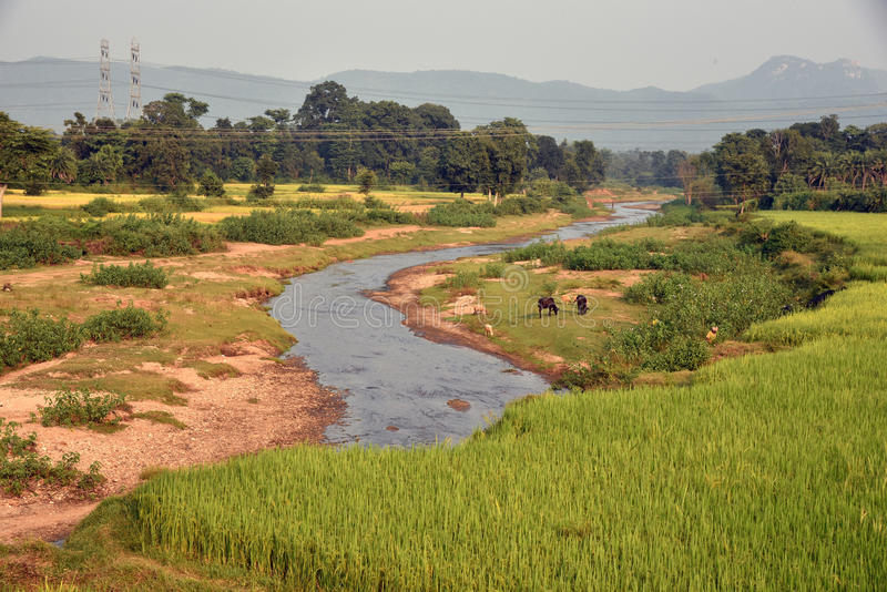 Agricultural Landscape in India. A wide view of the agricultural landscape at remote village of Purulia-India stock images