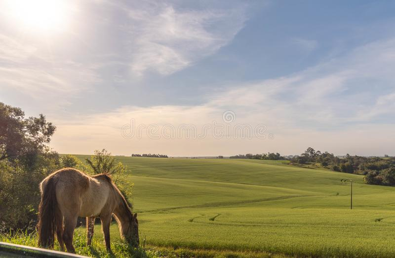 The agricultural production field in fallow and the horse 01. Pasture field in agricultural production area in the city of Cachoeira do Sul, RS, Brazil. Area of stock photos