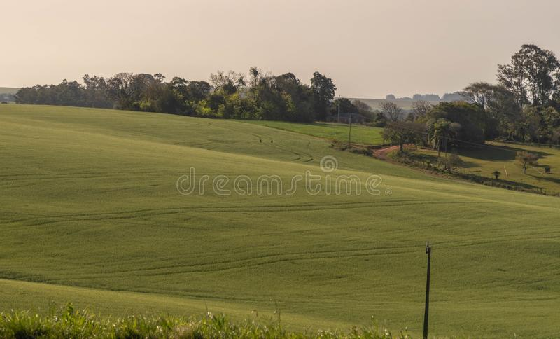 The agricultural production field in fallow 01. Pasture field in agricultural production area in the city of Cachoeira do Sul, RS, Brazil. Area of soybean stock photography