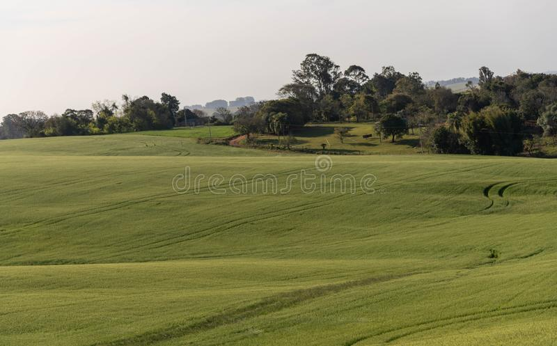 The agricultural production field in fallow 03. Pasture field in agricultural production area in the city of Cachoeira do Sul, RS, Brazil. Area of soybean royalty free stock photos