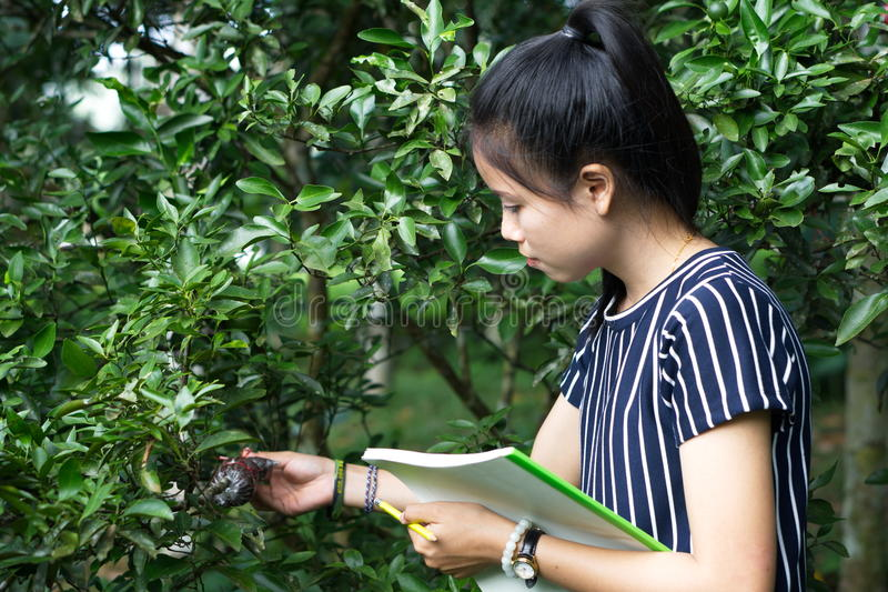 Agricultural Science stock photos