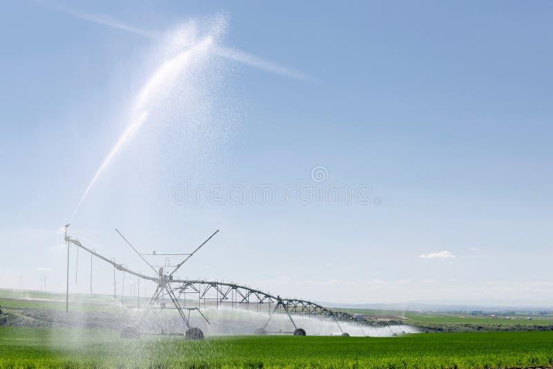 An agricultural sprinkler irrigating an Idaho wheat field. An agricultural center pivot sprinkler irrigating a wheat field in the fertile farm fields of Idaho stock photos