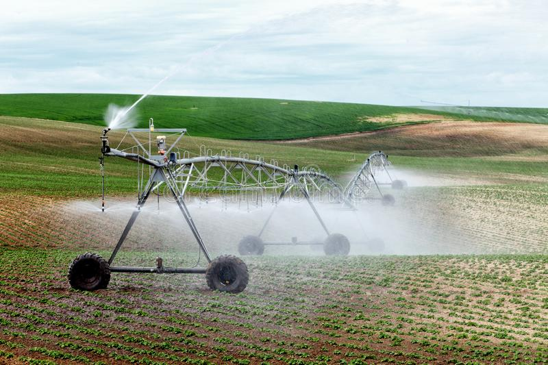An agricultural center pivot sprinkler irrigating a field of potatoes in Idaho. An agricultural center pivot sprinkler irrigating a field of potatoes in the stock photography