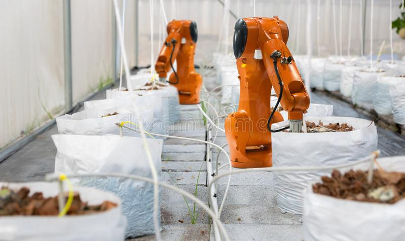 Agricultural technology robot automatic soil inspection farm eco plants organic stock image