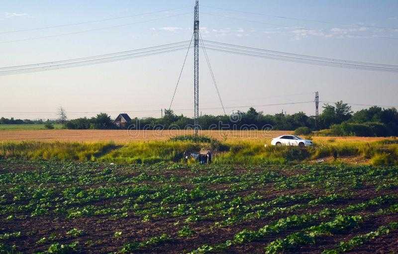 Agricultural work in the field on a summer day. Rich harvest royalty free stock image