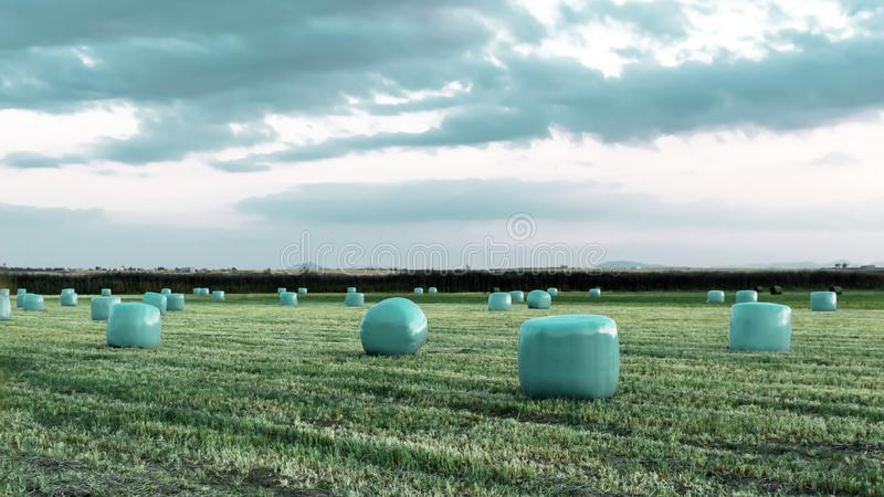 Agricultural work in a field at sunset. Equipment for forage. Film wrapping system. Round bales of feed for farm animals.  royalty free stock image