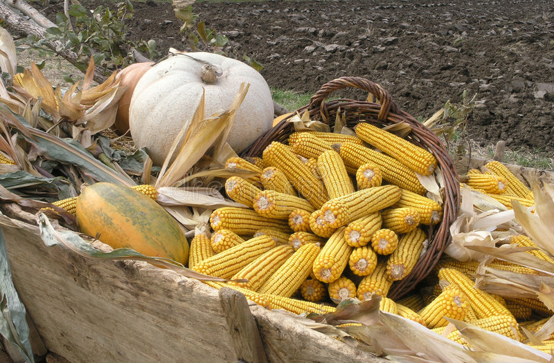 AGRICULTURALE fotografia de stock